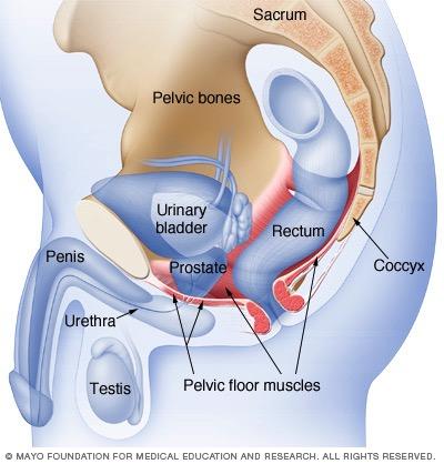 Velvet Box Urinary Incontinence
